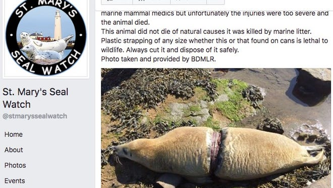 A steal died last week from injuries it sustained after being caught in plastic waste, according to St. Mary's Seal Watch.