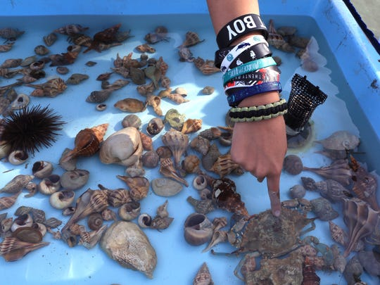 Baker Middle School students touch sea creatures in