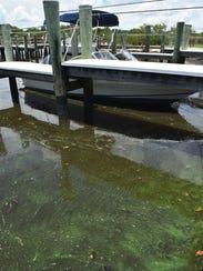 Algae is seen among boats docked at the Riverland Marina