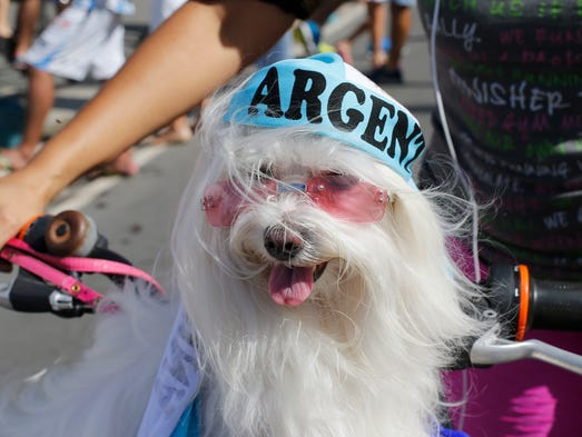A dog named Babel wearing an Argentina decoration, rides on the front of a bike in Rio de Janeiro.