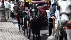 Carriage horses have been at work in the city since