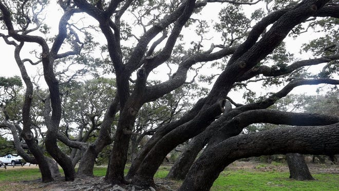 A speaker from the Texas Forest Service will discuss ways to save or replace hurricane-damaged trees Saturday at the Janet Harte Library in Flour Bluff.