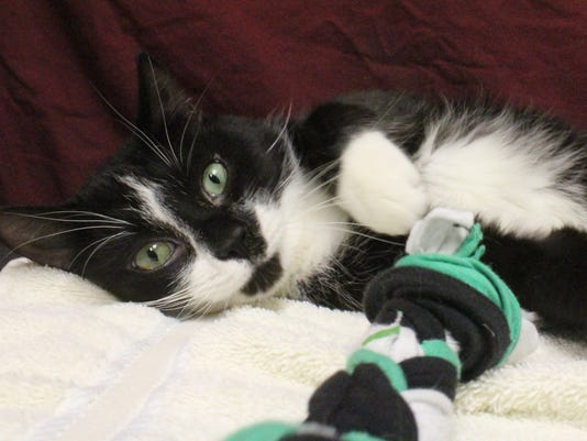 stc-1212-pet-of-the-week-monday-Domino-34103219-3.JPG
