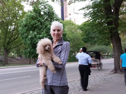 """Cincinnati Ballet artistic director and CEO Victoria Morgan's miniature apricot poodle Teddy Moe traveled with the company for Cincy in NYC. Here are photos of his New York adventures. """"After a long week of shows I finally got to go to Central Park with mom!!!"""""""