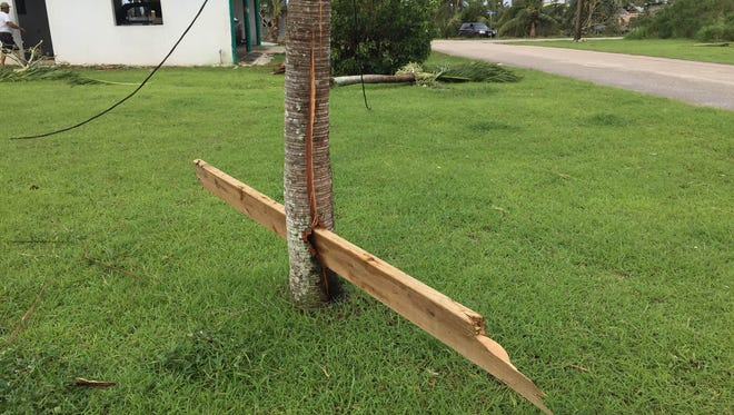 Saipan engineer Joseph Tudela shared a photo on Facebook of a piece of lumber that embedded and split in half a betel nut tree in the yard of a Dandan village home.