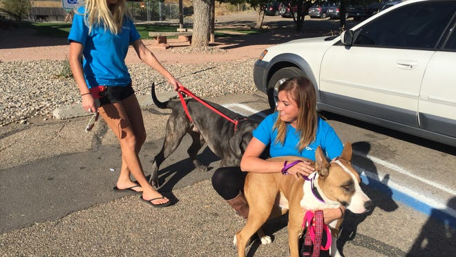 Anneleise Clark, left, and Ashley Dinger, executive director of Bounce Rescue, picked up three dogs Friday for a transfer from Larimer Humane Society Friday. The dogs had been surrendered Tuesday by All Aboard Animal Rescue, which formerly employed Clark and Dinger.