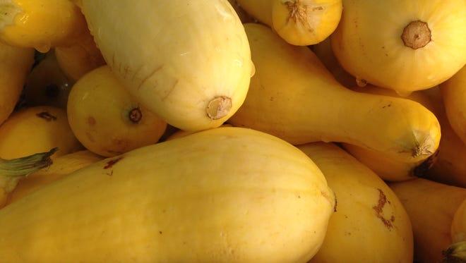 It's squash harvest time at 31 Produce in Alva, where we found summer squash.