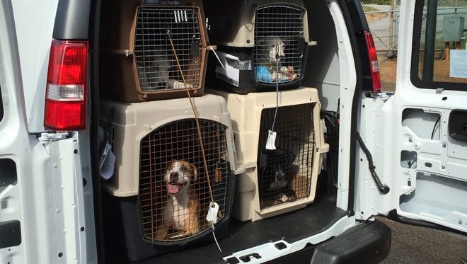 Dogs that have been displaced by floods are set to be transported from Greenville County Animal Care to Brother Wolf Animal Rescue in Asheville Friday.