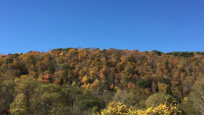 Foliage in Tioga County, New York.