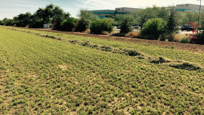 Chandler is looking for a new plan to develop 15 vacant acres along its Price Road Corridor. The land is in a prime spot just north of the Wells Fargo Corporate campus (pictured) to the south.