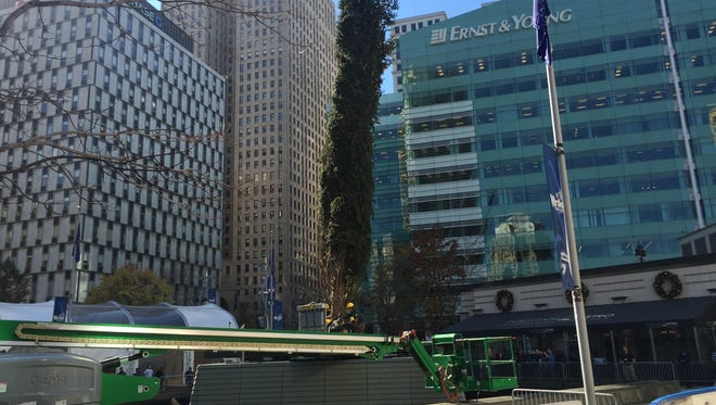 Crews raise a 60-foot Norway spruce trucked in from Cadillac in northern Michigan to be Detroit's official Christmas tree at Campus Martius Park on Wednesday, Nov. 4, 2015.