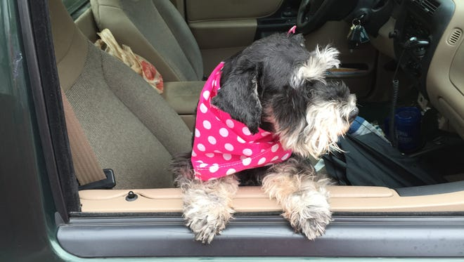 Riding in the car is one of the author's dogs' favorite things.