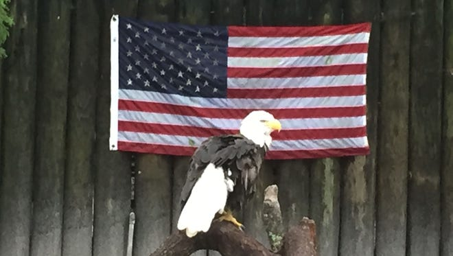 An eagle and an American flag.