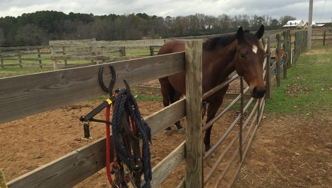 A horse in a nearby corral at Holly Hills Farm in Benton.