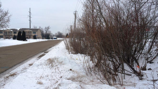 Brush grows along the east side of University Drive in Menasha.