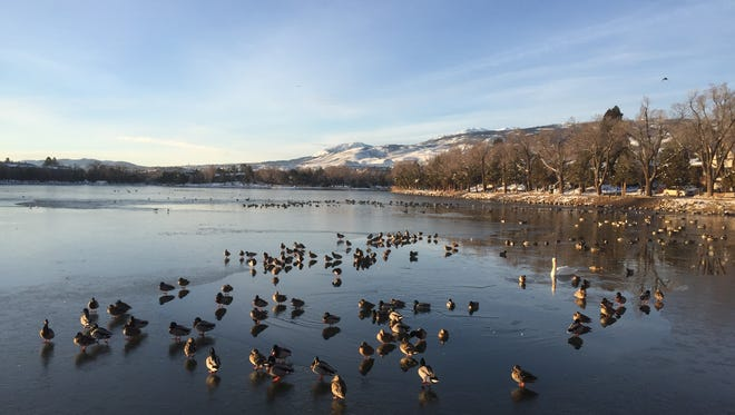 A view of several ducks swimming on Virginia Lake on Thursday Jan. 4, 2016. Forecasters expect temperatures to warm up by the weekend.