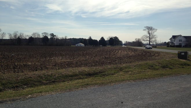 A view looking south from Rockawalkin Ridge Road toward the corn field where a New York resident hopes to build eight chicken houses on 42 acres of land.