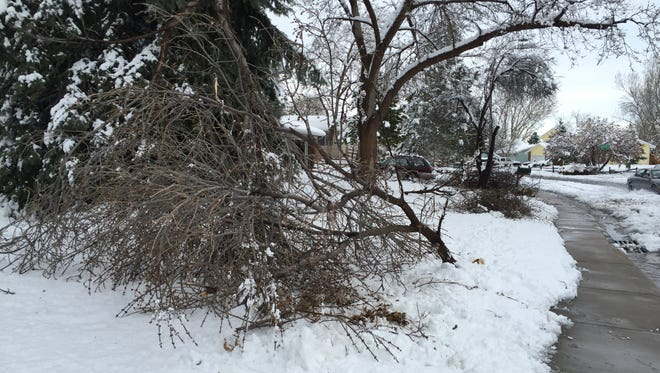 Lots of cleanup work awaits Fort Collins residents in the wake of a spring blizzard.