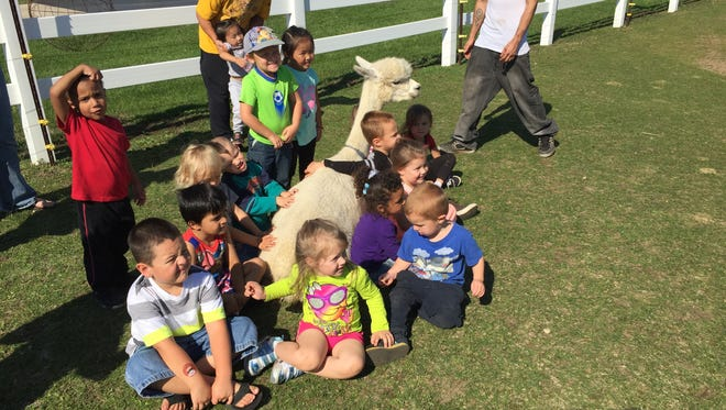 LondonDairy Alpacas will host the 15th annual Alpaca Odyssey and Farm Fest from 9:30 a.m. until 3 p.m. on June 5 to help support four youth and nonprofit organizations.