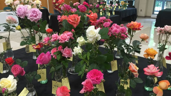 The Asheville Blue Ridge Rose Society's 19th annual  Rose Exhibition is underway at the North Carolina Arboretum.