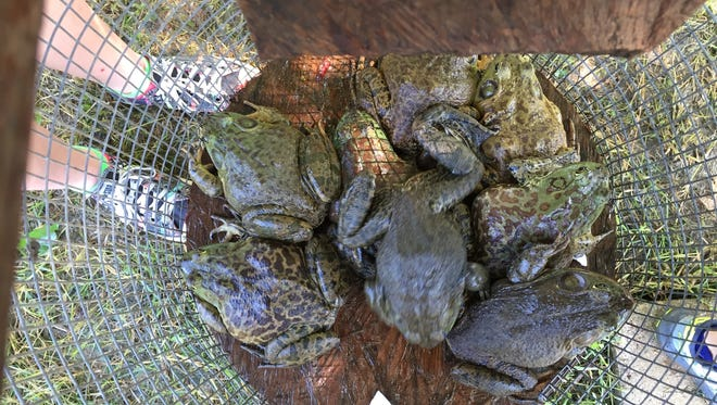A Basile man was recently cited by the LDWF for frogging violations.