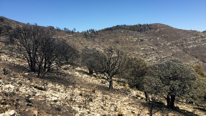 The Coyote fire has scorched more than 14,000 acres of land so far.