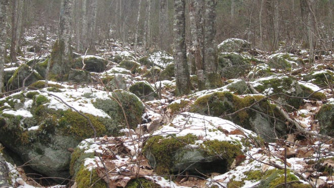 Rare boulderfields forest can be found on a newly preserved tract of land on Cold Mountain in Haywood County. The land, purchased by the SAHC, will be transferred to the state for inclusion in the Cold Mountain Game Lands.