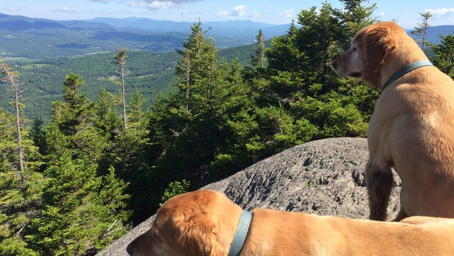 Hikers regularly think the dogs are lost and call the Stowe Police Department to find the owner.
