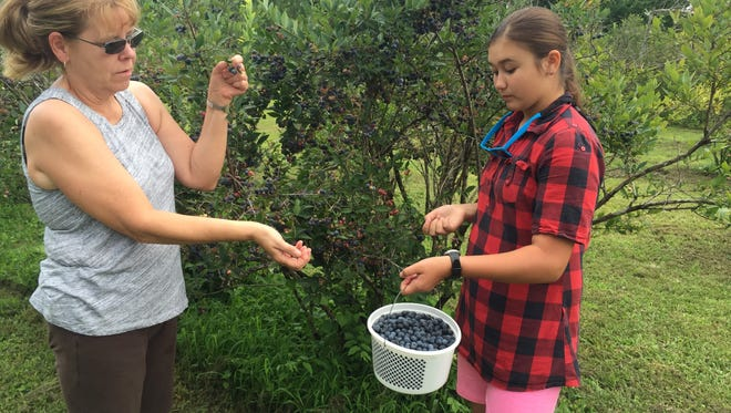 Yvonne, left, and Tiara Woytowich pick fruit at The Blueberry Patch.