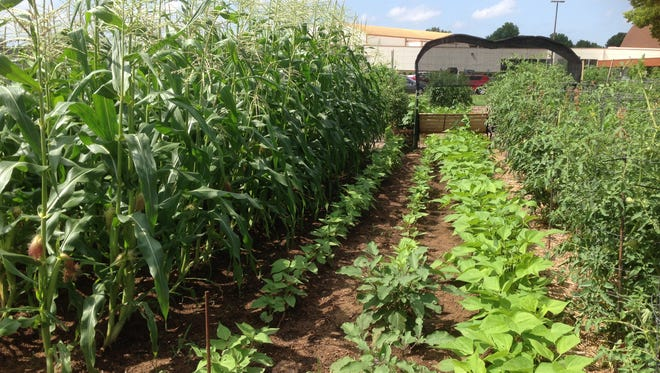 Greater Parkcrest-Wesley Community Garden is divided into two sections, a traditional farming plot and an organic chemical free plot.