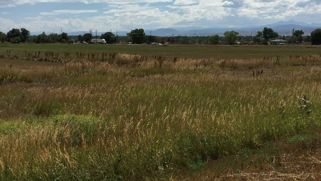 The view looking west from the proposed Gateway at Prospect site at the northwest corner of Interstate 25 and Prospect Road.