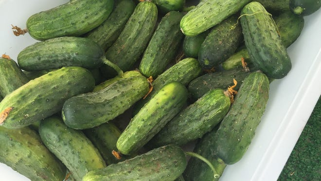 Cucumbers at a local farmers market.