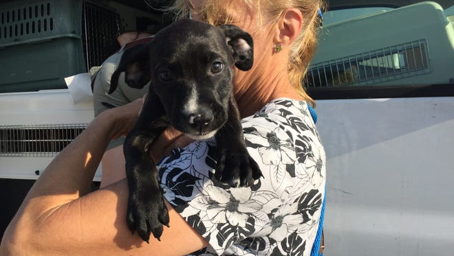 This cute puppy was among more than 120 cats and dogs flown to new homes Sept. 8, 2016, from Lafayette, Louisiana.