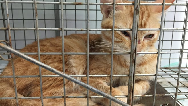 Pet Community Center spays and neuters unowned, community cats and releases them back to their neighborhoods when they have recovered.