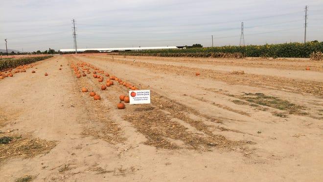 The empty pumpkin patch at Rocker 7 Farm Patch, as seen on Oct. 27, 2016.