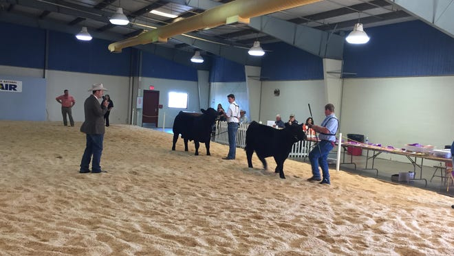 Two men show their cattle during the Alabama Beef Cattle Show at the Alabama National Fair on Friday, Oct. 28.