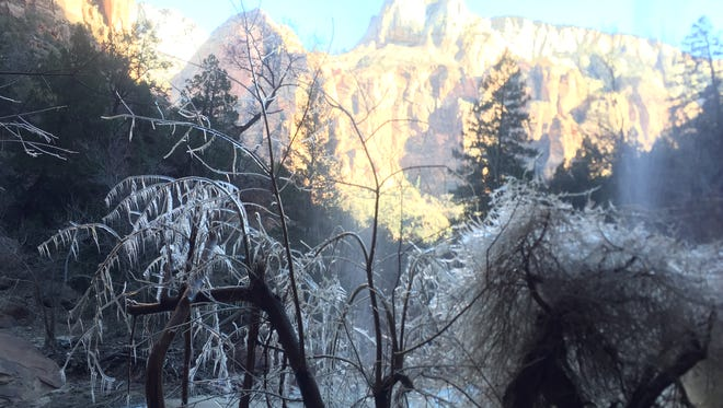 Ice clings to the branches of a frozen plant beneath a waterfall in Zion National Park on Sunday, Dec. 18, 2016.