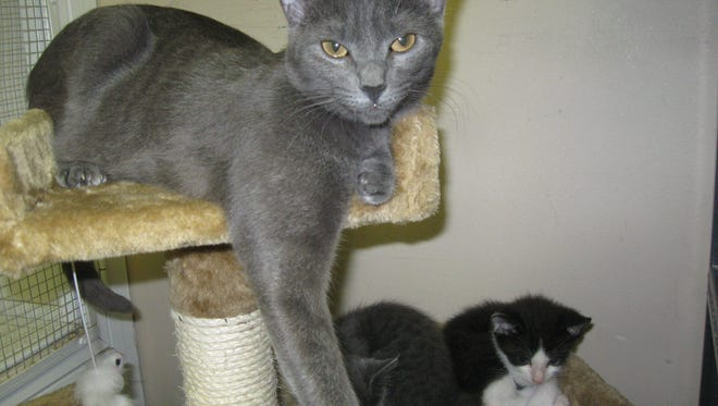 Willa and her babies are looking for a new home.