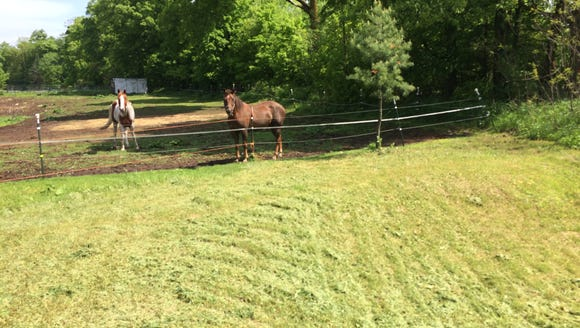 Curious horses in Langlade County.