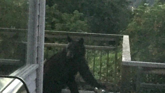 This bear was spotted on Bill Point, Bainbridge Island, Thursday night.
