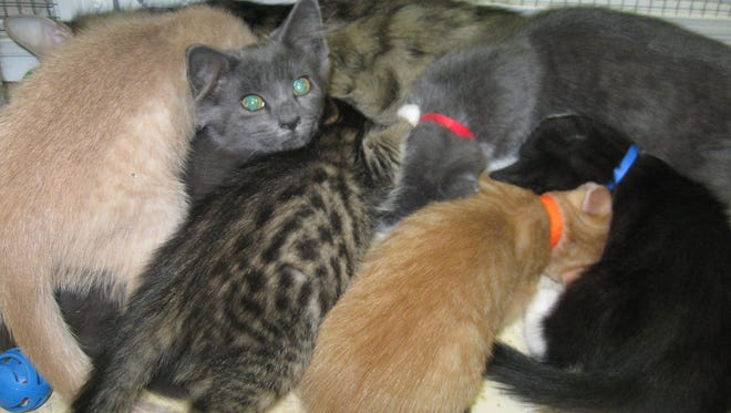 We are all from different litters and looking for homes!