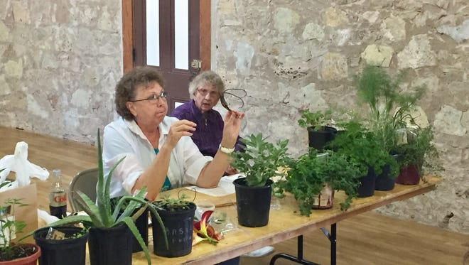 Susan Perry, member of the Native Plant Society, teaches children about medicinal plants Wednesday, June 14, 2017, at Fort Concho's Fun at the Fort event.