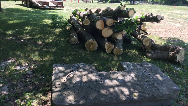 Two City Council members, some residents and a few activists weren't pleased Thursday to see trees taken down in Ormond Park. The city has plans to build an entrance for Groesbeck Golf Course through the park.