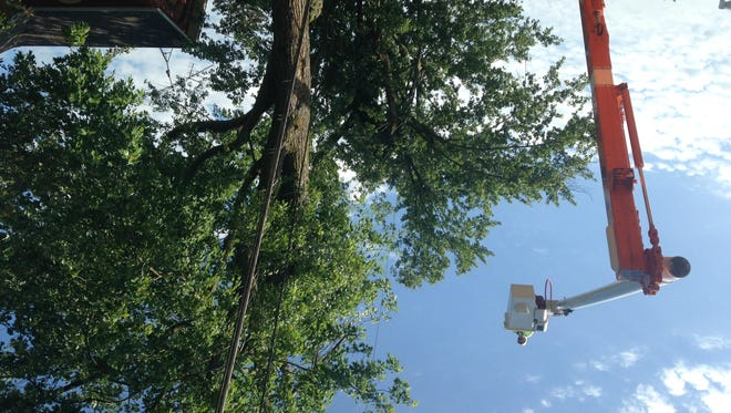 Crews trim damaged and  fallen trees and limbs on South Cochran Avenue in Charlotte Friday, July 7, 2017 after an overnight storm.