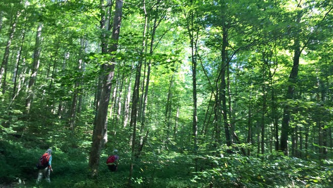 Jeff Stant of the Indiana Forest Alliance and scientist Leslie Bishop hike a section of Yellowwood forest on Aug. 23, 2017.