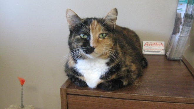 I'm not only beautiful but I have quite the purr. Ask for Hemi.