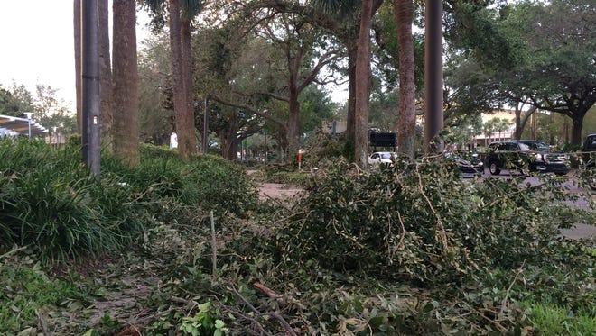 Plant debris on sidewalks lining International Drive in Orlando -- thanks to Hurricane Irma. Photo taken Sept. 11, 2017.