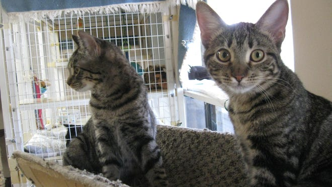 We are inseparable sisters -- and we are looking for a home together!