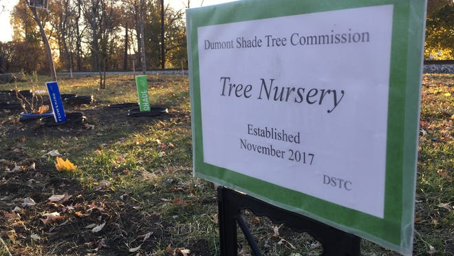 The Dumont Shade Tree Commission planted a tree nursery along the railroad on Sunset Street.