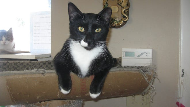 I'm checking you out to see if we'd be a good match for a forever home.